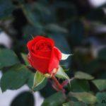Η ομορφιά της ασχήμιας…  (Γράφει η Δήμητρα Ν. Παπανικολάου)