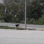 kozan.gr: Νεάπολη Βοΐου: Έκαναν δουλειές στο πρατήριο καυσίμων όταν είδαν να περνά, από πολύ κοντά, ένα αρκουδάκι (Bίντεο)