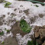 kozan.gr: Χαλάζι στην Εράτυρα του δήμου Βοΐου και τη γύρω περιοχή (Φωτογραφίες)