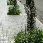 Σχόλιο αναγνώστριας στο kozan.gr:  Πνιγμένα στα χόρτα τα δεντράκια μπροστά από τη νέα δημοτική βιβλιοθήκη Κοζάνης; (Φωτογραφία)