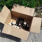 kozan.gr: Βατερό Κοζάνης: 7 νεογέννητα κουταβάκια πεταμένα μέσα σε ένα χαρτόκουτο δίπλα σε κάδο σκουπιδιών (Βίντεο & Φωτογραφίες)