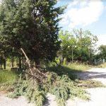 Καταγγελία αναγνώστη, από την Ξηρολίμνη Κοζάνης, στο kozan.gr: Άφησαν τα κομμένα κλαδιά στους δρόμους του χωριού» (Φωτογραφίες)