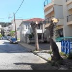 Koζάνη: Παράπονο αναγνώστη στο kozan.gr για την κοπή δύο δέντρων (Φωτογραφία)