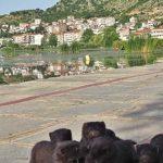 Δ. Μακεδονία: Λήψη μέτρων για τον περιορισμό των μινγκ στο οικοσύστημα της