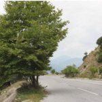 Δρόμος Ρύμνιο – Τριγωνικό:  Καλά με τα προεξέχοντα κλαδιά, αλλά και δέντρα στο …οδόστρωμα;
