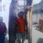 """kozan.gr: Δύο γουλιανούς """"τέρατα"""" ψάρεψαν, σήμερα το πρωί, στη λίμνη Πολυφύτου (Φωτογραφία)"""