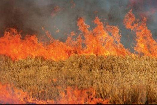 Η Διεύθυνση Αγροτικής Οικονομίας και Κτηνιατρικής Π.Ε. Κοζάνης, για τις αρνητικές επιπτώσεις από τη καύση αγροτικών εκτάσεων – υπολειμμάτων καλλιεργειών (καλαμιάς)