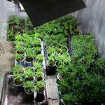 Συνελήφθη 58χρονος σε περιοχή των Γρεβενών για καλλιέργεια -192- δενδρύλλιων κάνναβης σε εργαστήριο υδροπονικής καλλιέργειας (Φωτογραφίες)