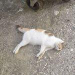 Σχόλιο αναγνώστη στο kozan.gr για νεκρές γάτες στην περιοχή της Αγ. Παρασκευής στην πόλης της Κοζάνης