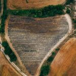 kozan.gr: Χωράφι λεβάντας, στη Λούβρη Βοΐου,σε σχήμα – περίπου – καρδιάς, σημείο φωτογράφησης για νεόνυμφα ζευγάρια (Φωτογραφίες)