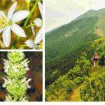 "kozan.gr: Βούρινος ή Μπούρινος Κοζάνης – Το σκαθάρι ""δολοφόνος"", ο άπιστος μαυρομυγοχαύτης και το μεσαιωνικό τσάι – Περισσότερα από 700 είδη φυτών ανθίζουν στο μικρό βουνό"