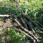 Σύλληψη τεσσάρων ατόμωνσε δασική περιοχή της Καστοριάς για παράβαση της δασικής νομοθεσίας (Φωτογραφίες)