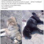 Εθελοντές Κυνοκομείου Πτολεμαΐδας: ΑΕΒΑΛ. 2 νεκρά δηλητηριασμένα ζώα