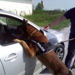 Γενική Περιφερειακή Αστυνομική Διεύθυνση Δυτικής Μακεδονίας: Ο τετράποδος συνεργάτης Bleid σε ώρα δράσης