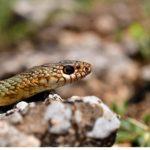 Καστοριά: Εικόνες άγριας φύσης δίπλα στην διάσημη λίμνη – 19 φωτογράφοι στην περιοχή