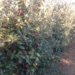 H Νομαρχιακή Επιτροπή Κοζάνης του ΣΥΡΙΖΑ κοντά στους μηλοπαραγωγούς της Εορδαίας (Φωτογραφίες – Δελτίο τύπου)
