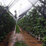 Μεσόβουνο Εορδαίας: «Εξευτελιστικές» οι τιμές των μήλων