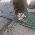 kozan.gr: Πτολεμαΐδα: Έβαλε σε τσουβάλι μια γάτα μαζί με τα γατάκια της …και το πέταξε σε κάδο απορριμάτων (Φωτογραφίες)