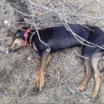 kozan.gr: Μετά το Βαθύλακκο του δήμου Σερβίων – Βελβεντού, φόλες – με νεκρά ζώα – και στους Πύργους Εορδαίας