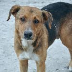 kozan.gr: Νεκρά αδέσποτα και δεσποζόμενα ζώα – από φόλες – στο Βαθύλακκο του δήμου Σερβίων – Βελβεντού