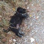 Εθελοντές Κυνοκομείου Πτολεμαΐδας Koυτάβια έγιναν λεία στα ζώα του κυνοκομείου (Φωτογραφίες)