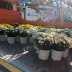 kozan.gr: Νέα λουλούδια, στην κεντρική πλατεία της Κοζάνης, ενόψει του εορτασμού της επετείου της απελευθέρωσης της Κοζάνης στις 11 Οκτωβρίου (Φωτογραφίες)