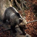 Αρκτούρος: Το Καταφύγιο της Αρκούδας σας περιμένει το τριήμερο της 28ης Οκτωβρίου για μία ξενάγηση στην άγρια πλευρά της ζωής