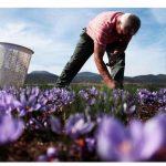 Κρόκος, λαχανικά, και αιγοπρόβειο στο 3ετές προώθησης της ΕΕ