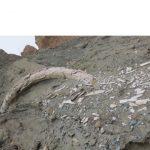 Παλαιοντολογικό Ιστορικό Μουσείο Πτολεμαΐδας: Εντοπίσθηκε παλαιοντολογικό εύρημα στο ορυχείο Αμυνταίου (Φωτογραφία)