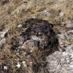 Η άγρια ζωή της Καστοριάς στο στόχαστρο δηλητηριασμένων δολωμάτων