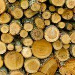Σύλληψη τριών αλλοδαπών, σε δασική περιοχή της Φλώρινας, για παράβαση της δασικής νομοθεσίας