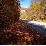Πανδαισία χρωμάτων στο φθινοπωρινό Βέρμιο (Φωτογραφίες)