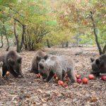 Τα πέντε ορφανά αρκουδάκια που φροντίζει ο ΑΡΚΤΟΥΡΟΣ (Φωτογραφία)