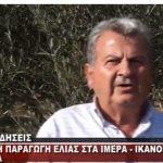 Iκανοποιητική η φετινή παραγωγή ελιάς στα Ίμερα του δήμου Σερβίων – Βελβεντού – Τι λέει Πρόεδρος του Συνεταιρισμού Ιμέρων Δημήτρης Παπαδόπουλος (Βίντεο)