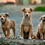 kozan.gr: Απέδωσαν οι συνεχιζόμενες προσπάθειες της Δημοτικής Αρχής – Το Καταφύγιο αδέσποτων σκύλων στο Δήμο Εορδαίας, δυναμικότητας 80 θέσεων, μετά την άδεια ίδρυσης, έλαβε και την πολυπόθητη, επί χρόνια, άδεια λειτουργίας