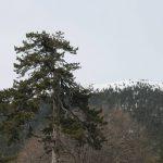 Ο ΕΟΣ Κοζάνης διοργανώνει την Κυριακή 3.2.2019 εξόρμηση στο Βέρμιο