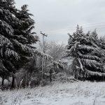 kozan.gr: Σε πτώση δέντρου στην περιοχή του Κασλά, οφείλεται η χθεσινή διακοπή ρεύματος, σε τμήμα της πόλης της Κοζάνης (Φωτογραφία)