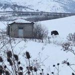 Αρκούδα εθεάθη το Σάββατο 12.1.2019 στη διασταύρωση Κομάνου (Φωτογραφίες)