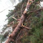 Έπεσε δέντρο στον προαύλιο χώρο του Ιερού Ναού Αγίων Κων/νου και Ελένης Κοζάνης
