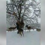 kozan.gr: Mαγικό τοπίο, με τα ελάφια, στο χιονισμένο πάρκο του Αγίου Παντελεήμονα στον Άγιο Δημήτριο Κοζάνης (Βίντεο)