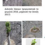 Πώς το LIFE Green Link πρασινίζει καινοτόμα τα ερημωμένα λιγνιτωρυχεία της Δυτικής Μακεδονίας