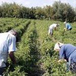 Απλήρωτοι παραμένουν 49 Αγρότες στο Μεσόβουνο