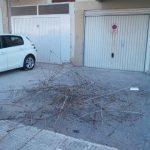 Σχόλιο αναγνώστη στο kozan.gr: Mετά απο κλάδεμα του Δήμου Κοζάνης