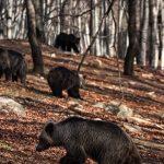 Η Άνοιξη έφτασε – Ξύπνησαν οι αρκούδες στο Νυμφαίο Αλλά με μια θλιβερή απώλεια