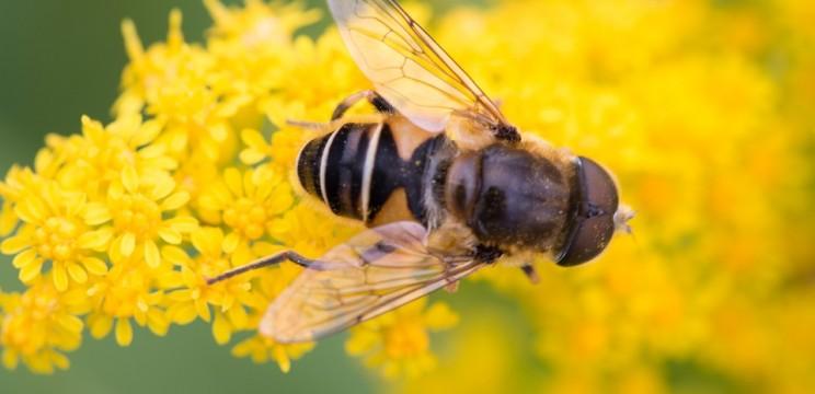 Ο Μελισσοκομικός σύλλογος Κοζάνης ενημερώνει για την κλοπή 2 διώροφων μελισσοσμηνών στην περιοχή Κουρί Κοζάνης.