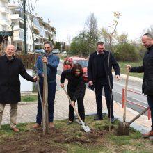 Κοζάνη: Φύτεψαν, το πρωί της Πέμπτης, συμβολικά, από ένα δέντρο στο πάρκο στην περιοχή Κρεβατάκια