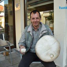 Μανιτάρι γίγας στον Αυγερινό Κοζάνης (Φωτογραφίες)