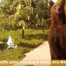 Αρκούδα πρόσωπο με πρόσωπο με οδηγό στο χωριό Αετός στη Φλώρινα (Bίντεο)