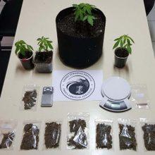 Συνελήφθησαν δύο άτομα στην Πτολεμαΐδα, για καλλιέργεια δενδρυλλίων κάνναβης και κατοχή ναρκωτικών (Φωτογραφία)