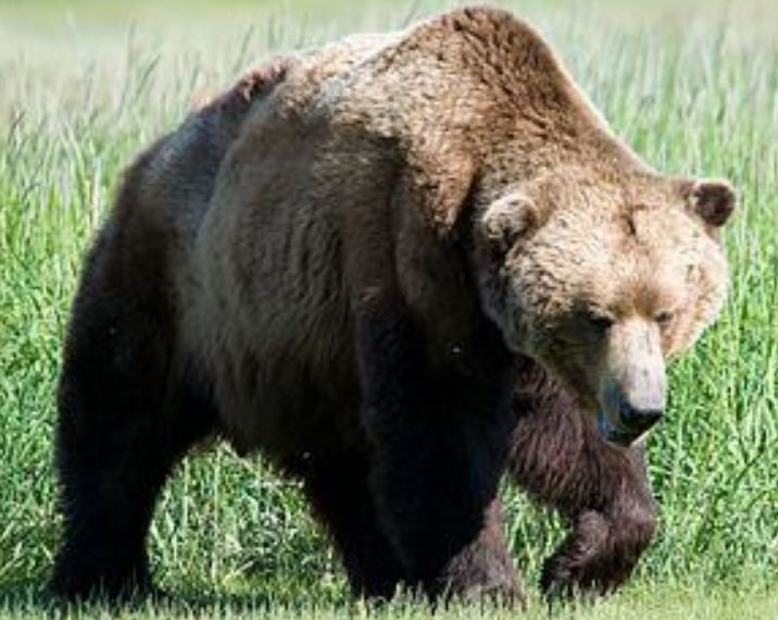 kozan.gr: Παράπονα & προβληματισμοί κατοίκων του Βοΐου μετά την ανάρτηση του kozan.gr για τρεις επιθέσεις αρκούδων, τις τελευταίες τρεις εβδομάδες, σε ζώα στο Μικρόκαστρο